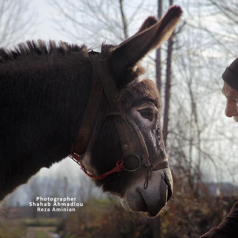 جایزه بهترین فیلم جشنواره بیگور اسپانیا به «سینما خر» رسید | عکس