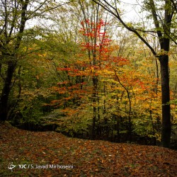 پاییز جنگل سراوان | عکس