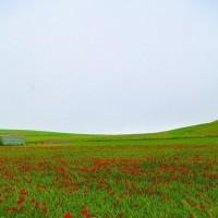 دشت شقایق، اردبیل | عکس