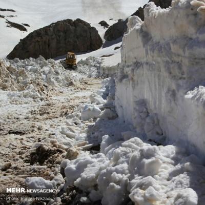 رهایی «عسل کشان» از برف | عکس
