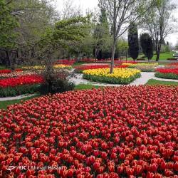 جشنواره لالههای مشهد | عکس