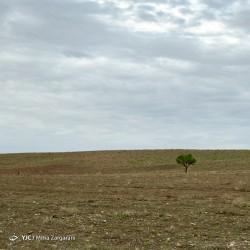 طبیعت نیشابور | عکس