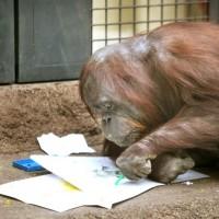 نقاشی حیوانات | عکس