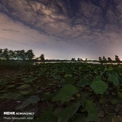 تالاب نیلوفر آبی بابل | عکس