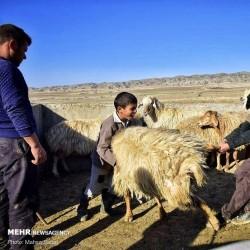 عشایر «کرمانج» | عکس