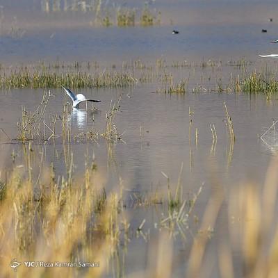 پرندگان مهاجر | عکس
