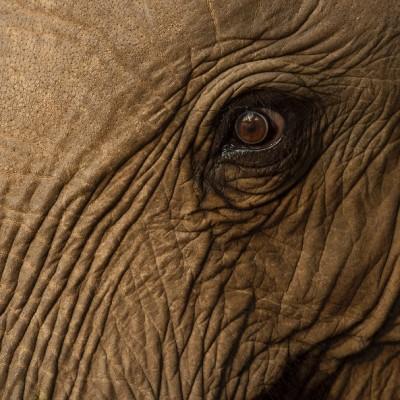 حیات وحش فیلها | عکس