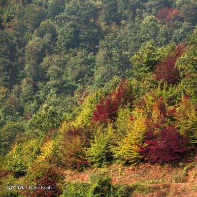 پاییز جنگل دیلمان؛ گیلان | عکس