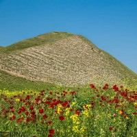 طبیعت بهاری استان گلستان | عکس