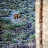پارک ملی کویر، حوالی کاروانسرای دیرگچین | عکس