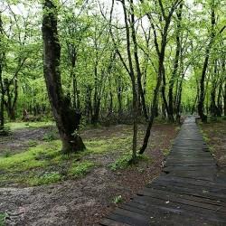 پارک جنگلی النگدره در روزهای بهاری | عکس