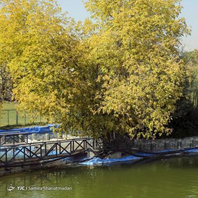 تهران پاییزی | عکس