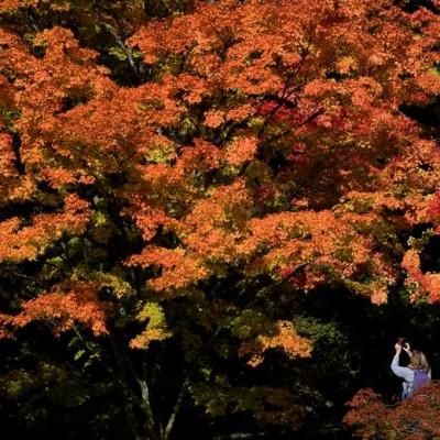 پاییز در نقاط مختلف جهان | عکس