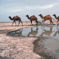 حیات مجدد دریاچه هامون | عکس