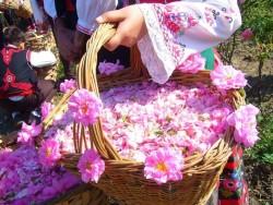 جشنواره گلاب گیری در سعدآباد | عکس