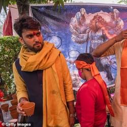 خوردن ادرار گاو برای پیشگیری از کرونا | عکس