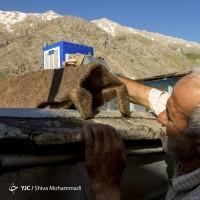 فرنجی کردستان | عکس