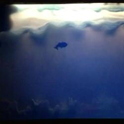 فیلمتئاتر ماهی قرمز کوچولو | عکس