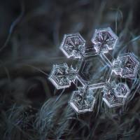 دانههای زیبای برف | عکس