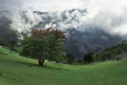 کروناویروس فرصتی برای پاکسازی جنگلابر / جنگلکاری ۳ هکتاری در روستای ابر | عکس