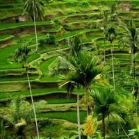 منطقه «اوبود» Ubud، اندونزی | عکس