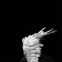 نمایش من چه جوری ممکنه یه پرنده باشم؟ | گزارش تصویری تیوال از نمایش من چه جوری ممکنه یه پرنده باشم؟ / عکاس: یاسین محمدی | عکس